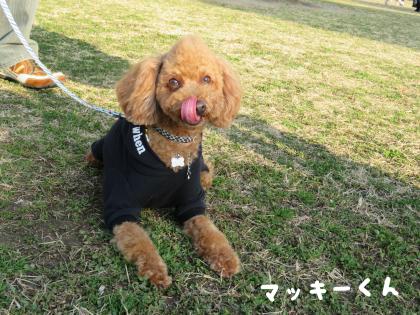二太2015/02/11-6-マッキーくん