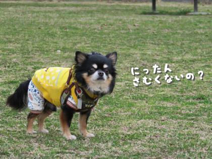 二太2015/03/03-3