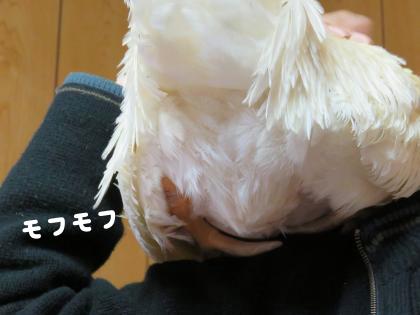 二太2015/03/15−5