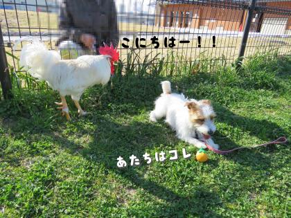 二太2015/03/28-5
