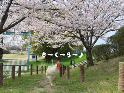 二太2015/04/02-7