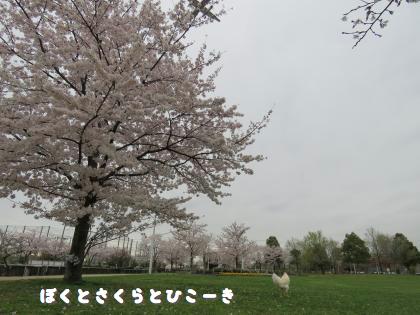二太2015/04/03-3