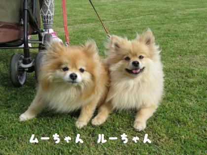 二太2015/04/24-5 ムーちゃん ルーちゃん