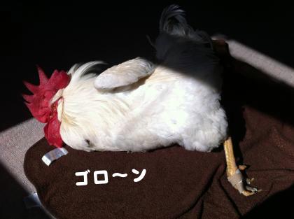 二太2015/05/01-1