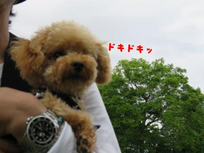 二太2015/05/04-8