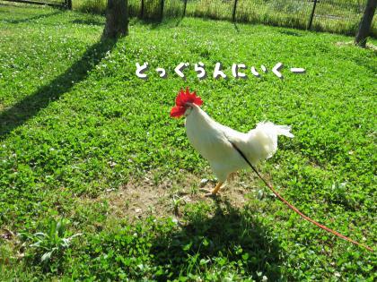 二太2015/05/05-5