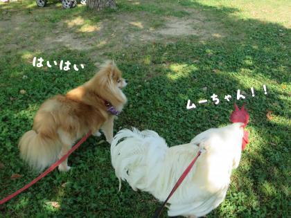 二太2015/05/08-5