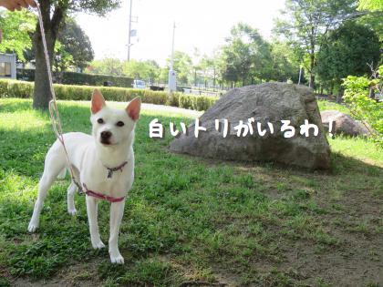 二太2015/05/14-1