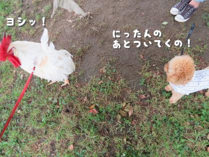 二太2015/05/16-5