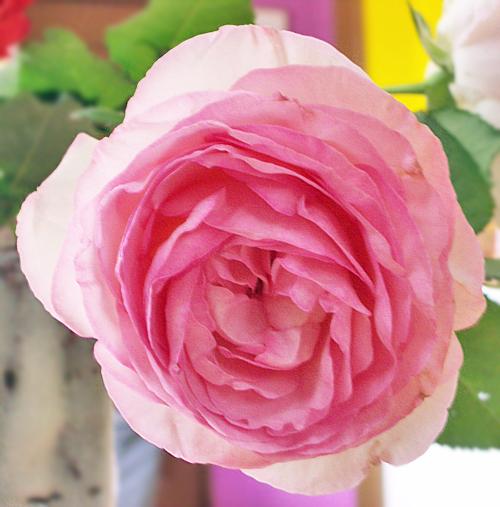 ビッグ薔薇