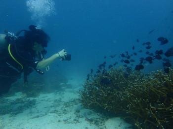 タオ島、水中写真、海ブログ