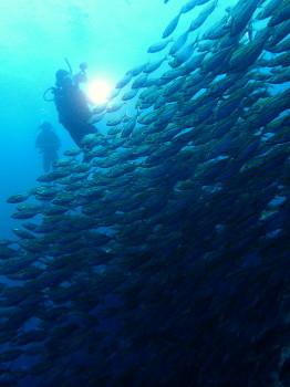 タオ、水中写真、海ブログ
