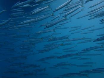 タオ島、水中画像