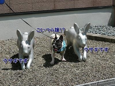 ウサギ (4)