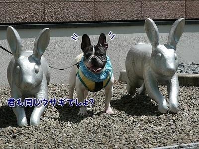 ウサギ (5)