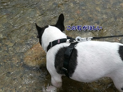 河川敷 (4)