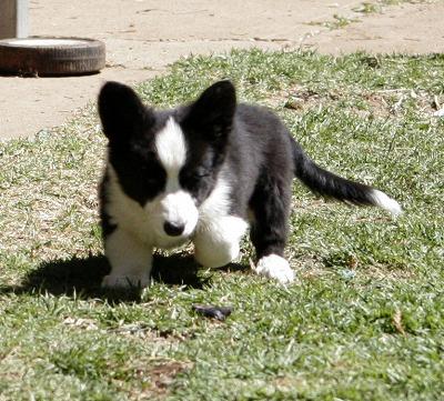 s-Kei,puppy1