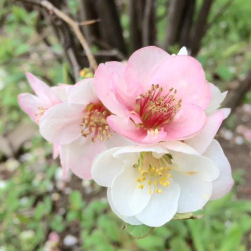 お花見*2_convert_20150323210104