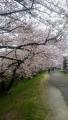 tamasai_0329.jpg
