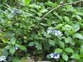 gosikinuma-annai2-web600.jpg