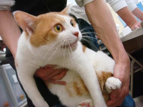 cat_48700_3.jpg