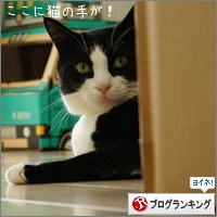 dai20150818_banner.jpg