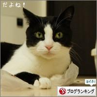 dai20150821_banner.jpg