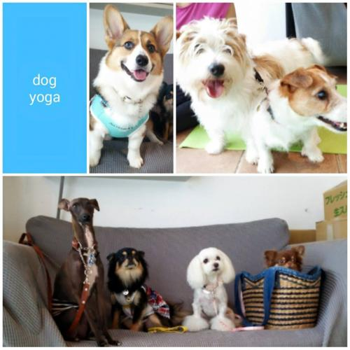 dog+yoga2_convert_20150617140529.jpg