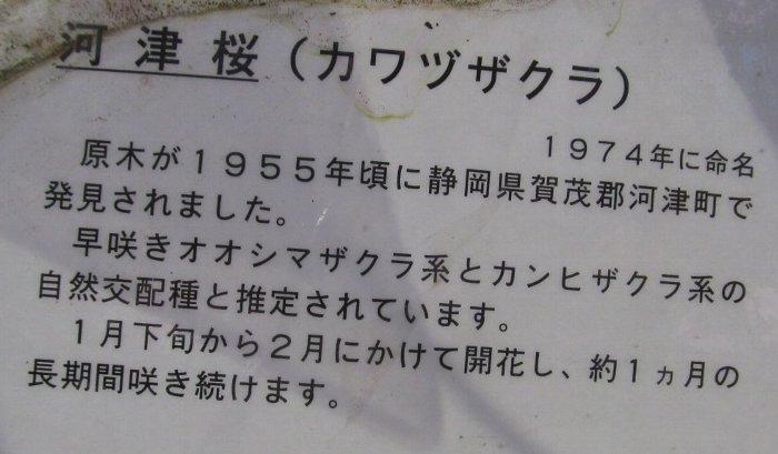20150312sakura02.jpg