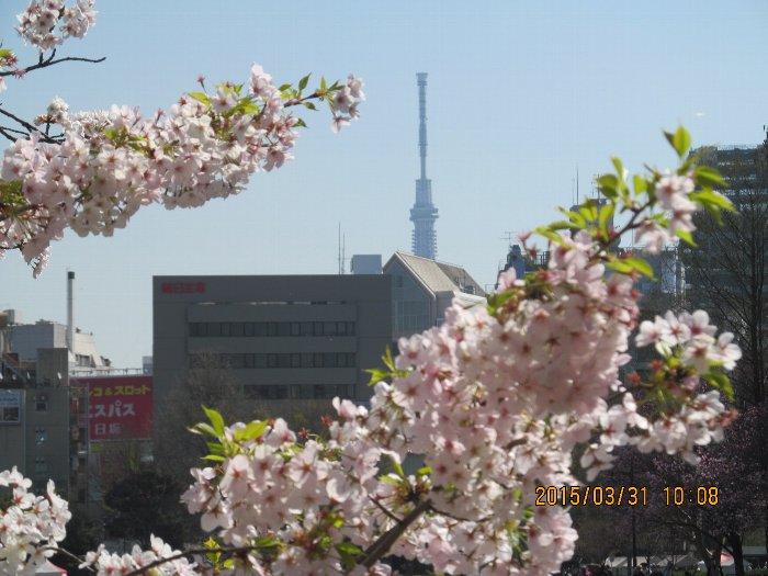 20150331shinobazu03.jpg
