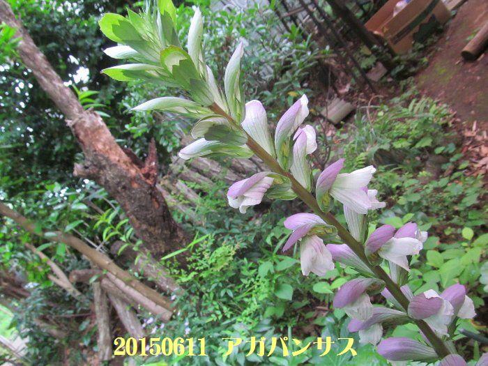 20150611tsuyuiri01.jpg
