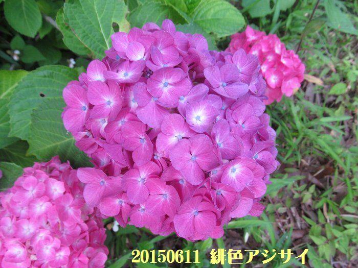 20150611tsuyuiri03.jpg