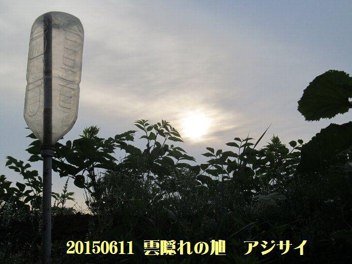20150611tsuyuiri08.jpg