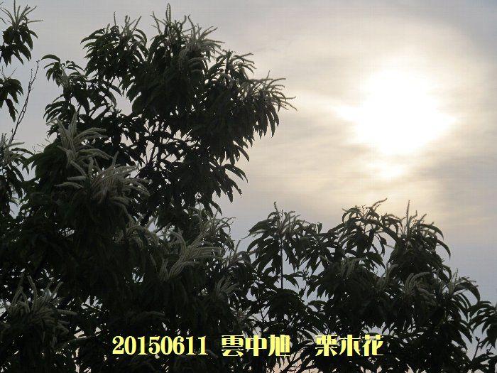 20150611tsuyuiri09.jpg