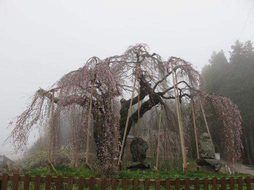 袖之山 しだれ桜