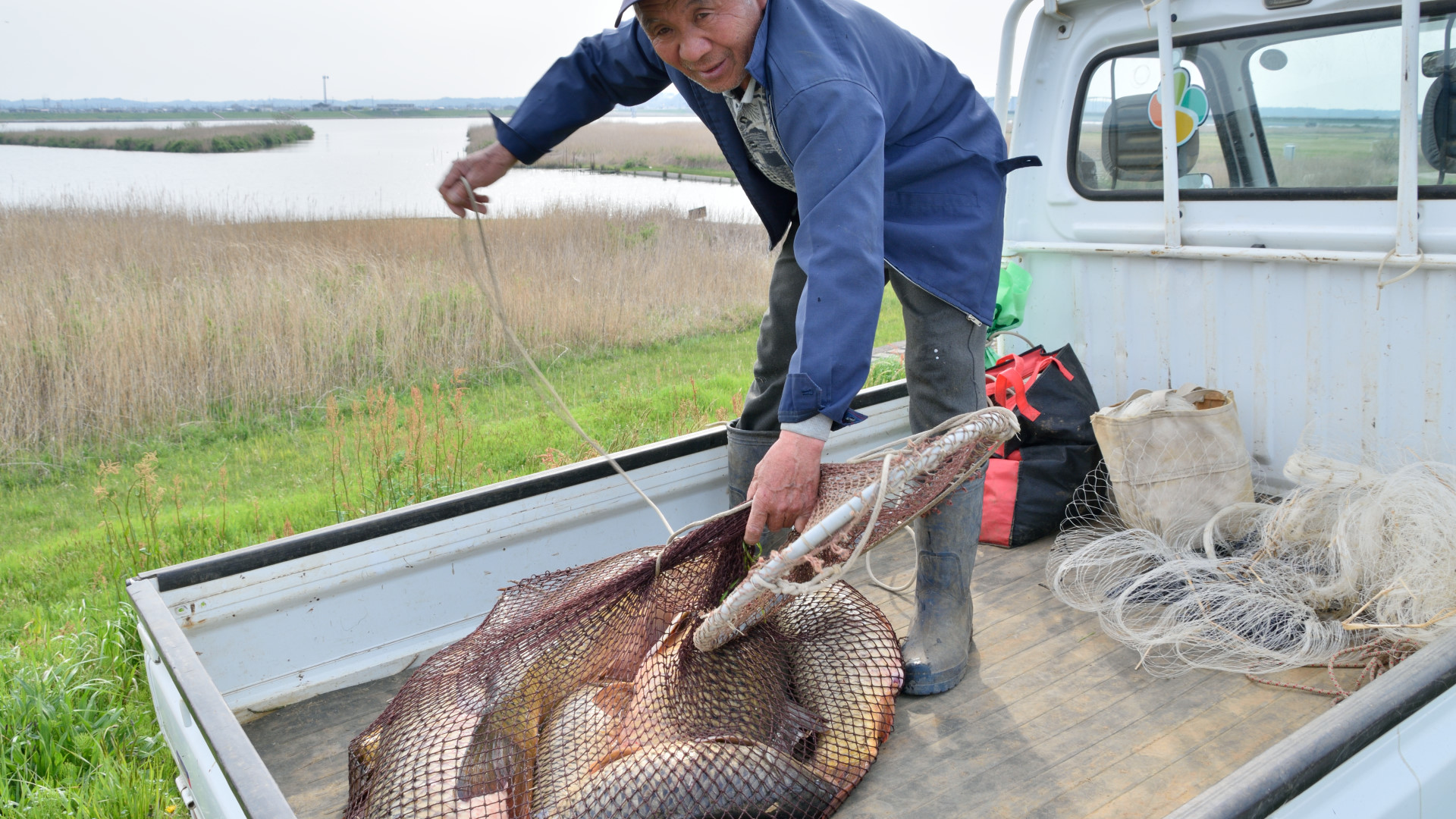 豊漁だ!利根川ののっこみ鯉