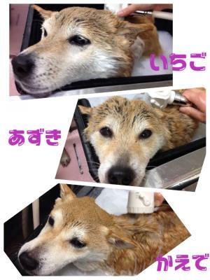 かえ入浴_convert_20150117223752