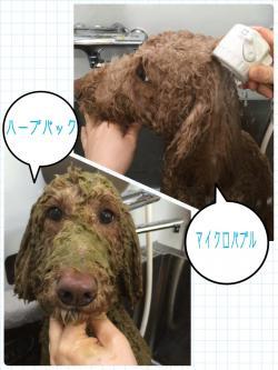 リン入浴_convert_20150321225907