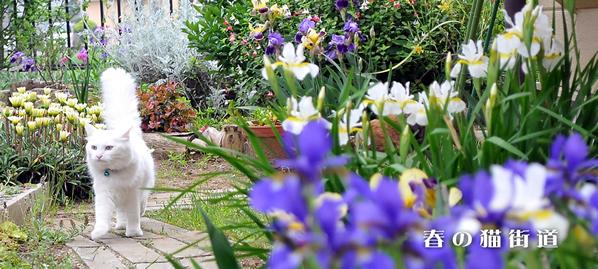 春の庭と猫