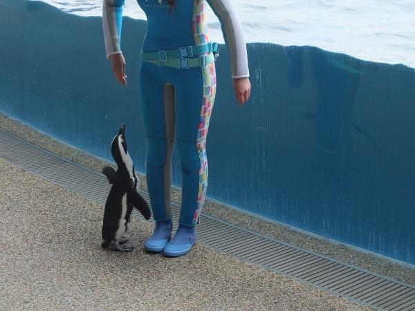 33ペンギンショー
