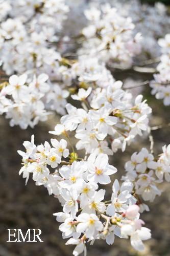 花見 (1 - 16)