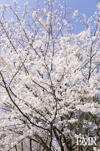 花見 (5 - 16)