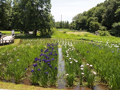 水生植物園