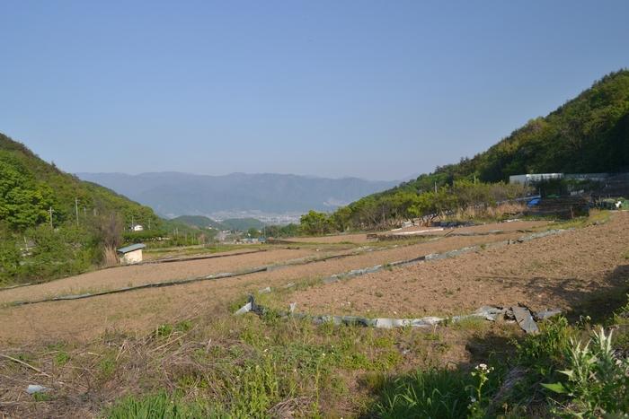田んぼからの眺め50