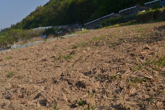 田んぼの土は今51