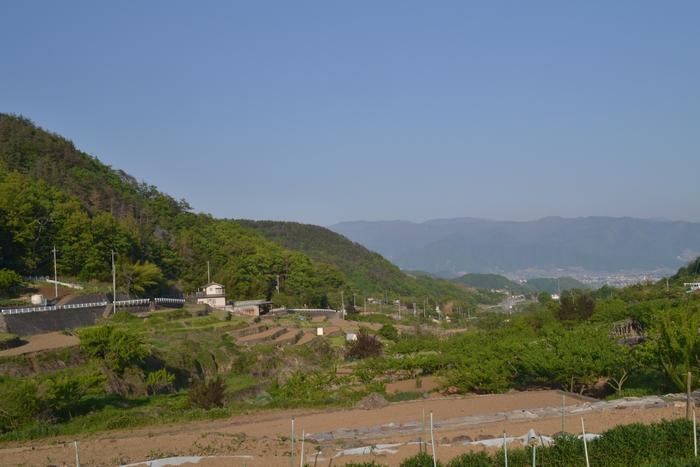 田んぼから塩山の町を眺めて60