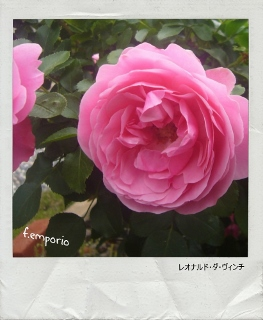 PhototasticCollage-2015-06-12-10-20-58 (263x320)