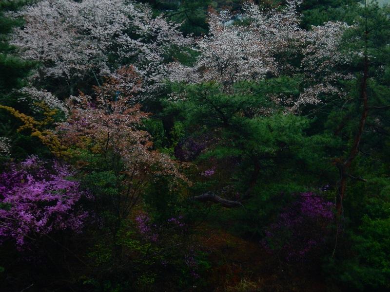Nikon 20150413 095