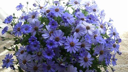 s-薄紫の花②