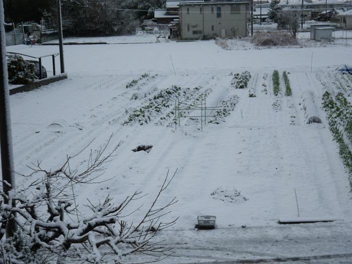 雪景色15_01_01